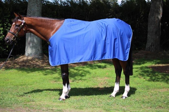 GREGORY EQUINE DRESS SHEET - COTTON