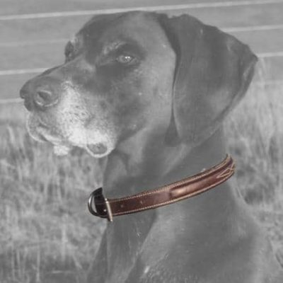 Hinterland Best Mate Dog Collar and Lead
