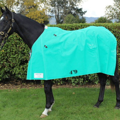 Gregory Equine Lined Canvas Rugs