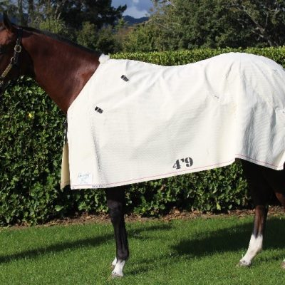 Gregory Equine Sheets