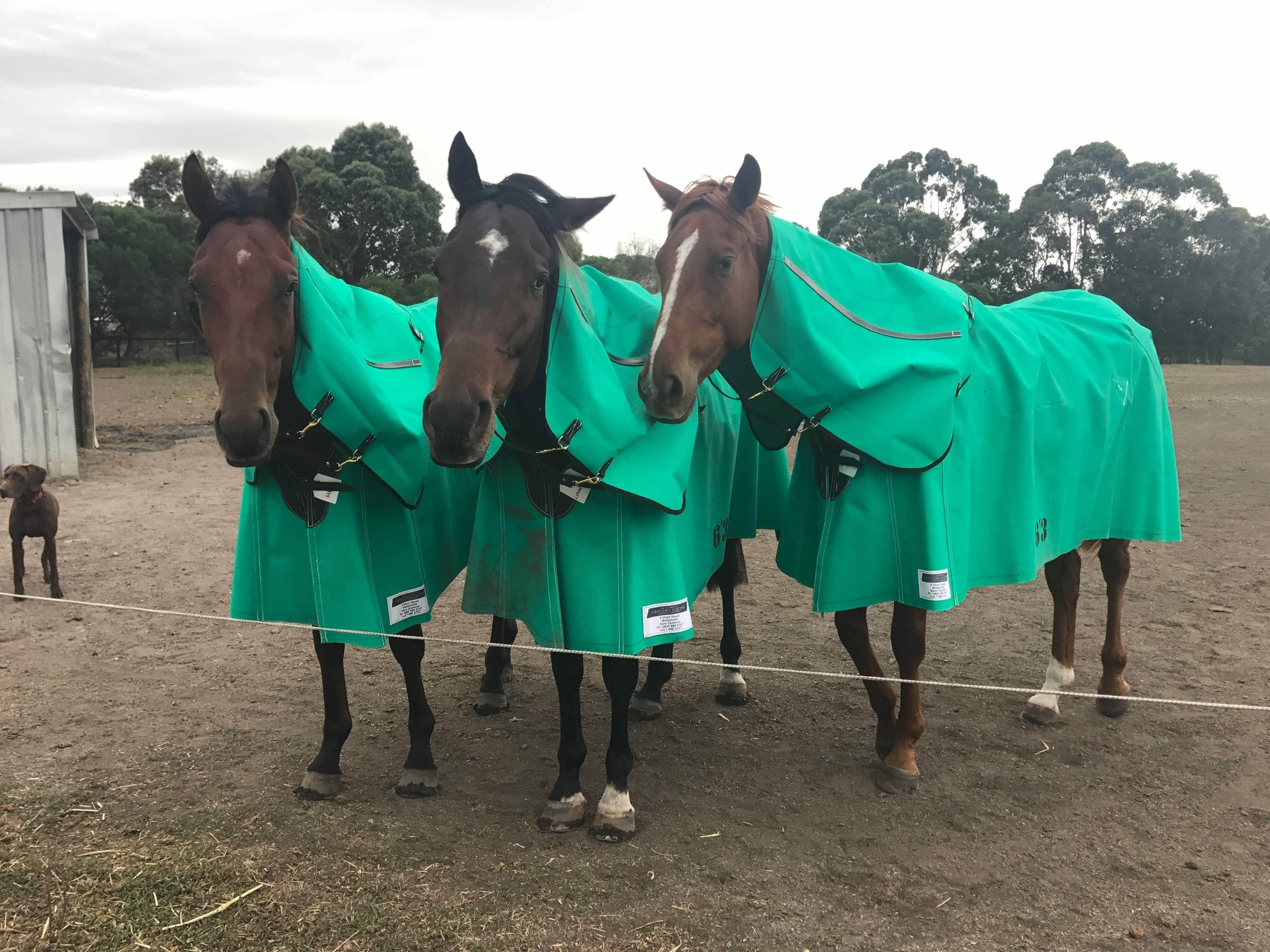 Gregory Equine The Best Ing Horse Cover We Ve Ever Used